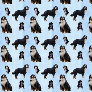 Berner Sennenhunde Muster Hellblau