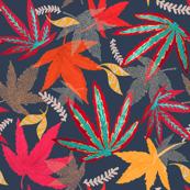 Autumn Maple (Japanese Acer)