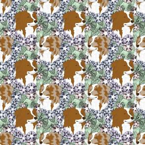 Floral Australian Shepherd bicolor portraits B