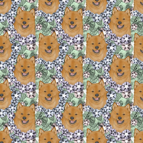 Floral Finnish Spitz portraits