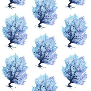Fan Coral - Blue