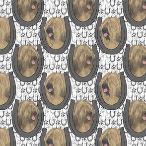 Tibetan terrier horseshoe portraits B