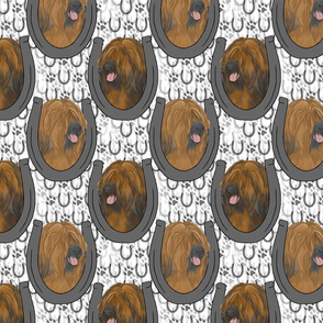 Tibetan terrier horseshoe portraits C