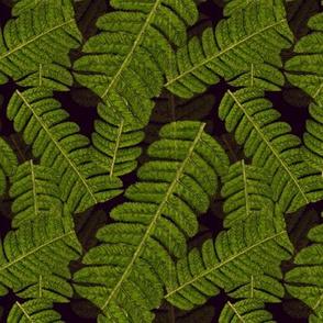 Leaf on Black