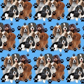 cavaliers alll colors blue background