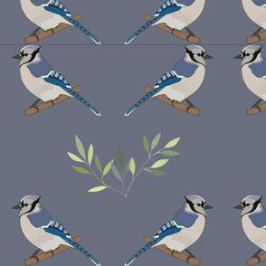 Blue Jay on Grey