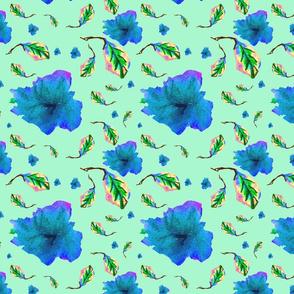 blue leaf azalea