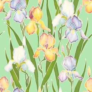 Irises on green
