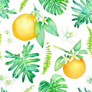 Citrus Tropics - white