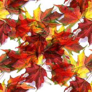 Maple Leaf Sonata