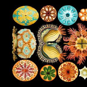 Haeckel's Ascidiae