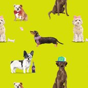 Rdogs-of-insta-chart_shop_thumb
