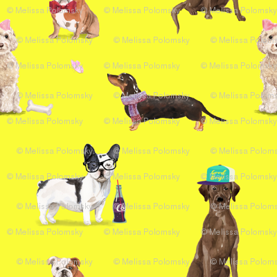 Dogs of Insta // Yellow