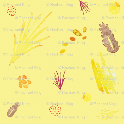 Savannah yellow comp
