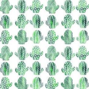 Green cacti small