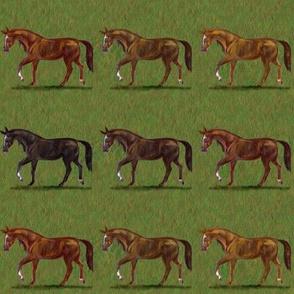 Chestnut Horses Stripe