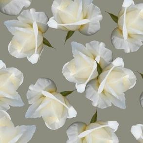 White Rosebuds on Warm Gray