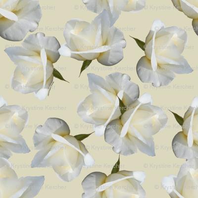 White Rosebuds on Cream