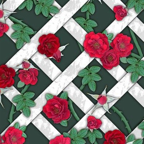 Crimson red roses on white lattice over dark sage