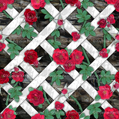 Crimson red roses on white lattice over rock