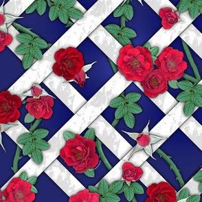 Crimson red roses on white lattice over royal blue