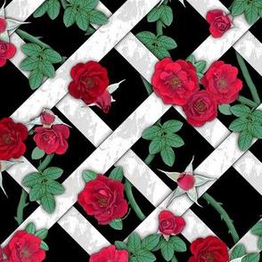 Crimson red roses on white lattice over black