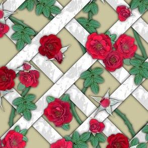 Crimson red roses on white lattice over cream