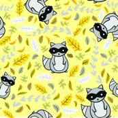Fall Raccoons