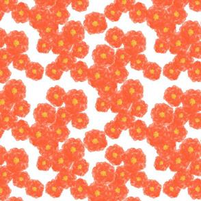 Coral Camellia Blossoms