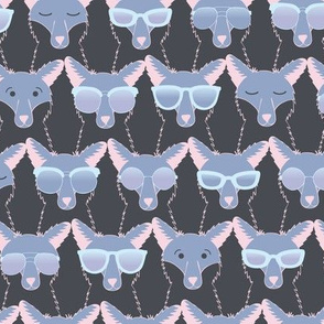 Cool Foxes
