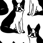 Rrboston-terriers-black_shop_thumb