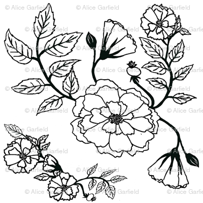 Black & White Coloring Book Roses
