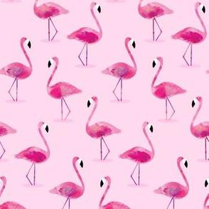 flamingos - pink watercolor