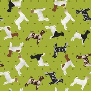 Goats Mixed Breed lime Polkadot