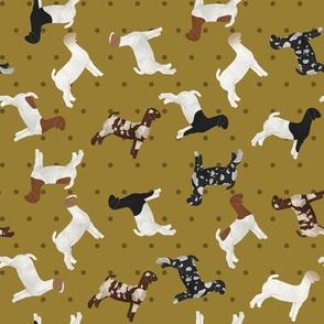 Goats Mixed Breed Mustard Polkadot