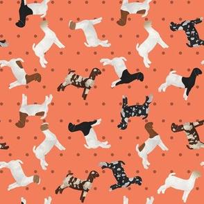 Goats Mixed Breed orange Polkadot
