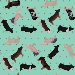 Pig Mixed Breed aqua Polkadot