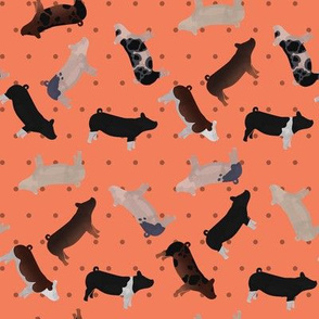 Pig Mixed Breed orange Polkadot