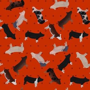 Pig Mixed Breed red Polkadot