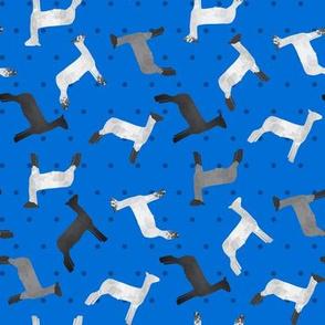 Sheep Mixed Breed blue Polkadot