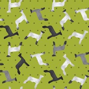 Sheep Mixed Breed lime Polkadot