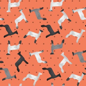 Sheep Mixed Breed orange Polkadot