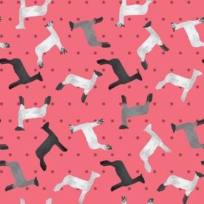Sheep Mixed Breed Pink Polkadot