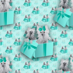 """Chinese Crested in a Gift box abt 3 1/2"""""""
