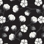 Cotton Boils on Black