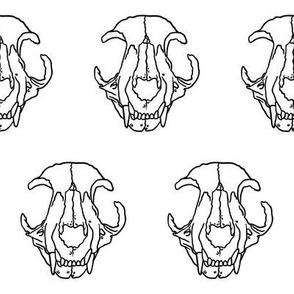 Cat Skull - On White