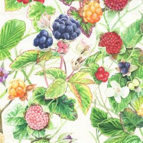 Rubus Large