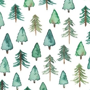 (Bigger) Evergreen Christmas Trees or Forest