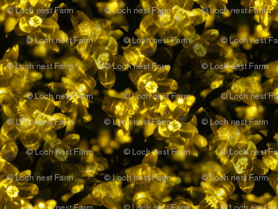 Jessamine Fireworks | Electric Floral Photo Print