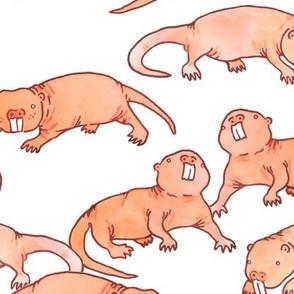 Large Naked Mole Rats